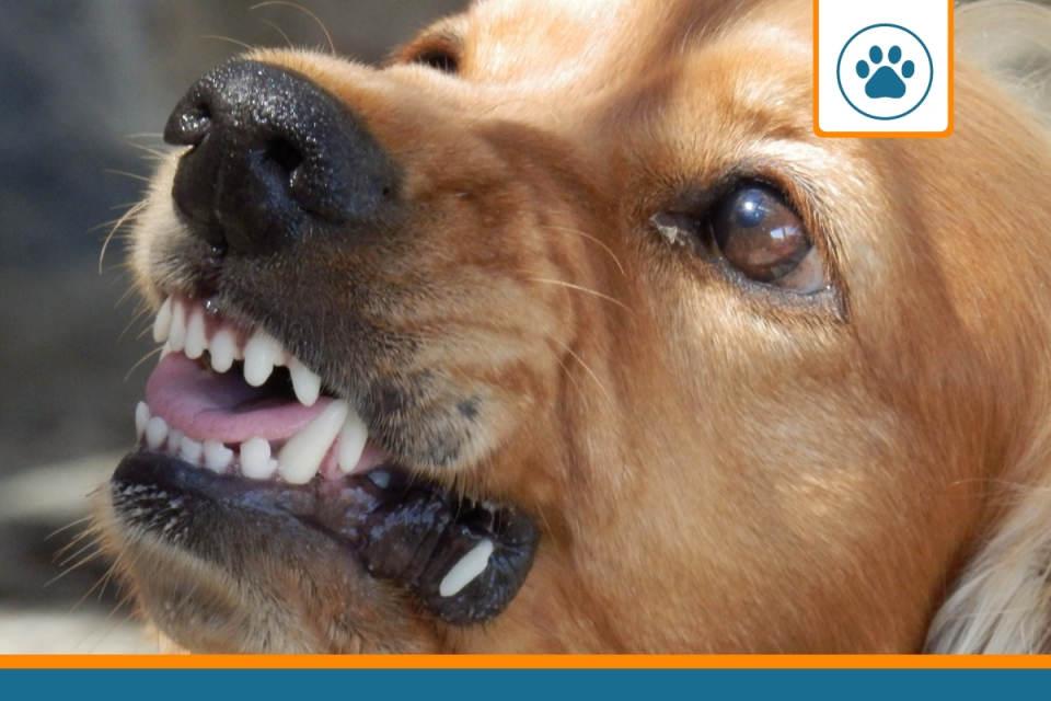 chien pouvant causer un accident