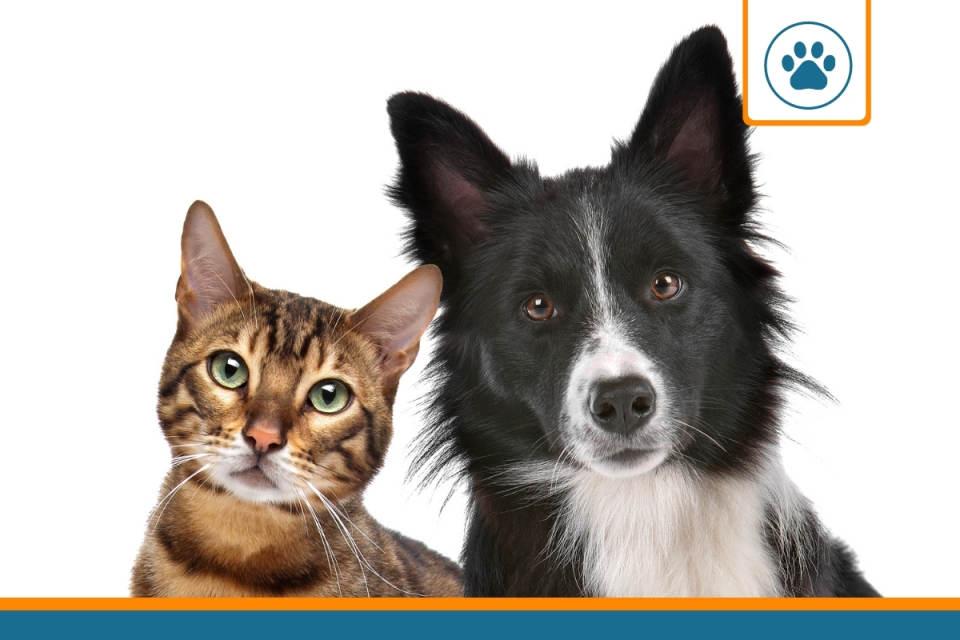 animaux couverts par une assurance santé
