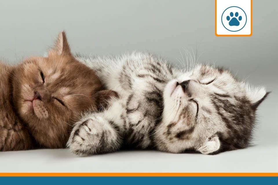 chatons couverts par une assurance santé
