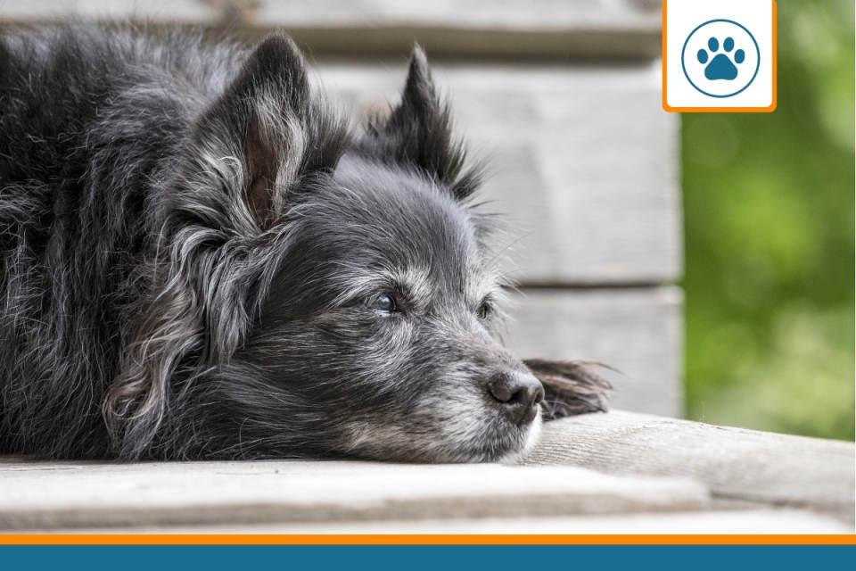 chien de plus de 10 ans couvert par une assurance