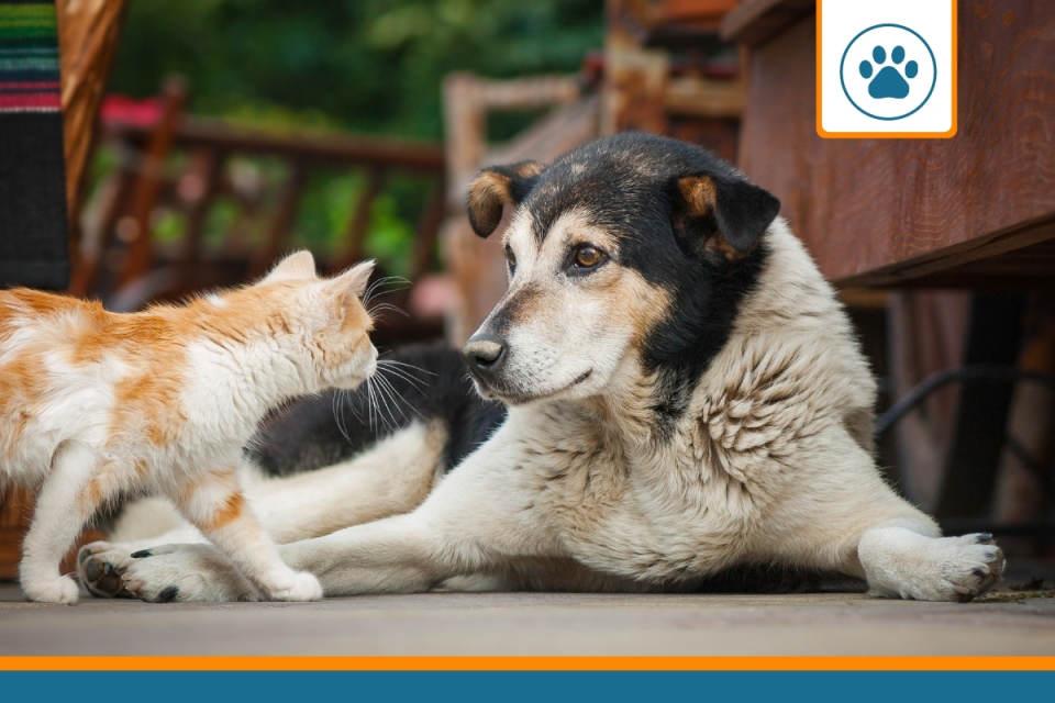 animaux cherchant un avis sur les mutuelles chiens et chats