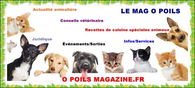 un magazine pour chien très intéressant