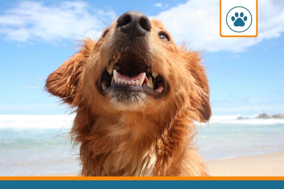 comparatif des assurances pour les chiens