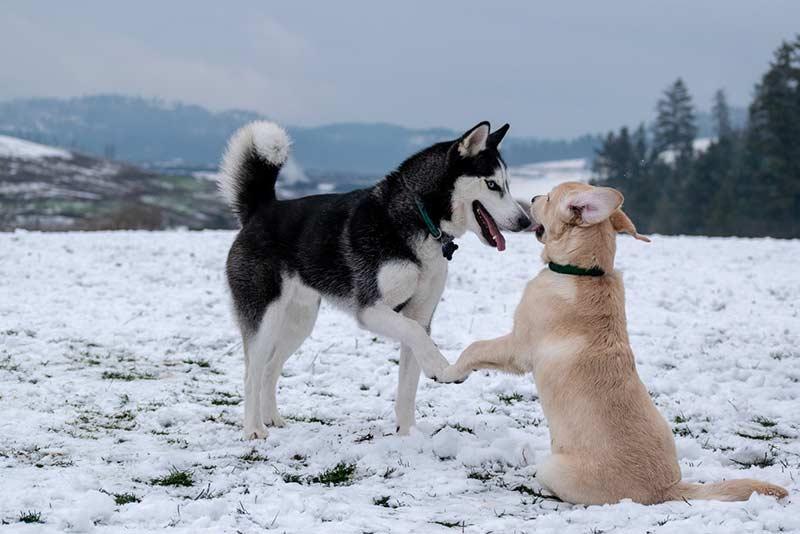 assurance pour chien prix