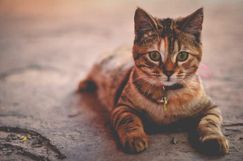 animaux santé assurance