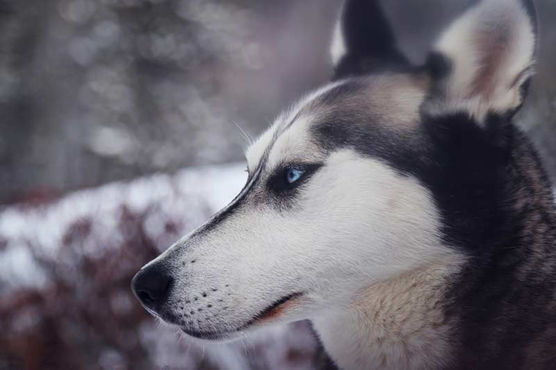 assurance chien 2 categorie