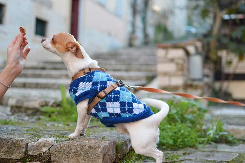 assurance chien 2ème catégorie