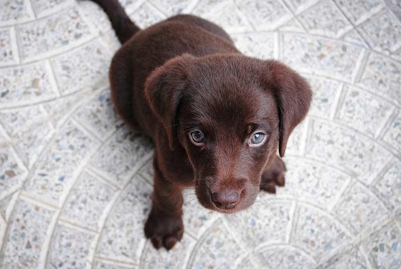 assurance médicale chien