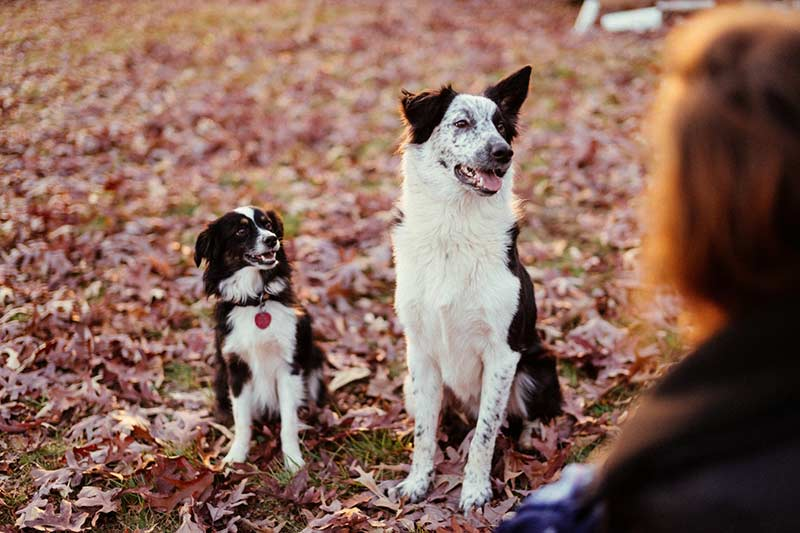 prix assurance santé chien
