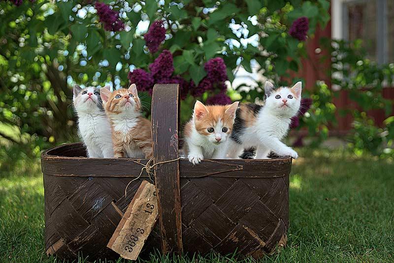 assurance pour chat pas cher