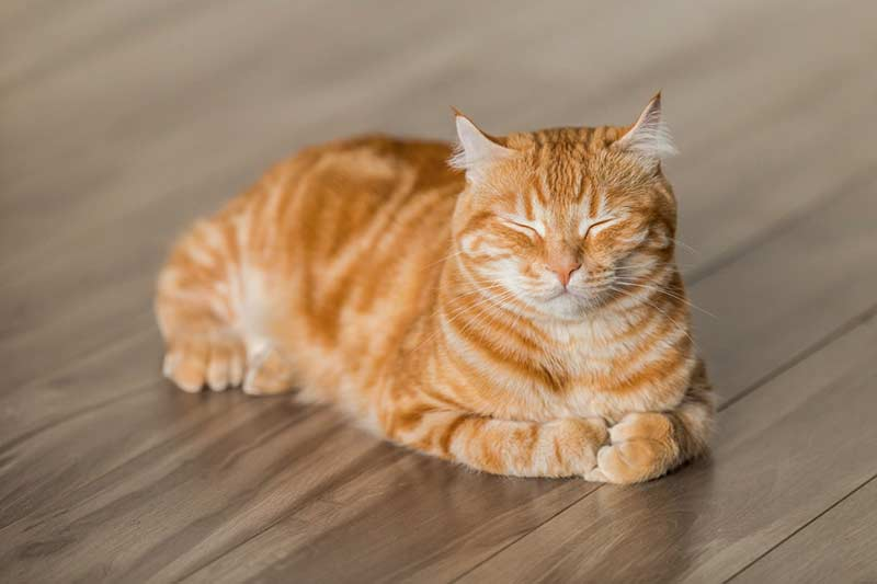assurance santé pour chat