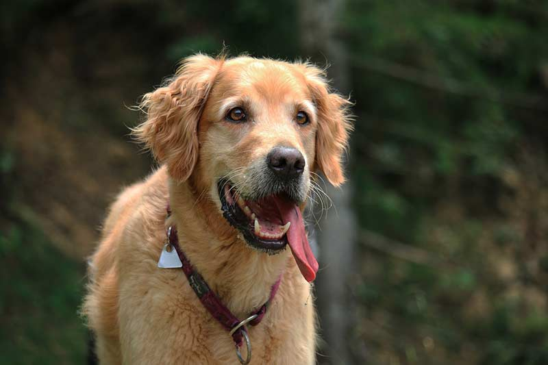 assurance maladie chien prix