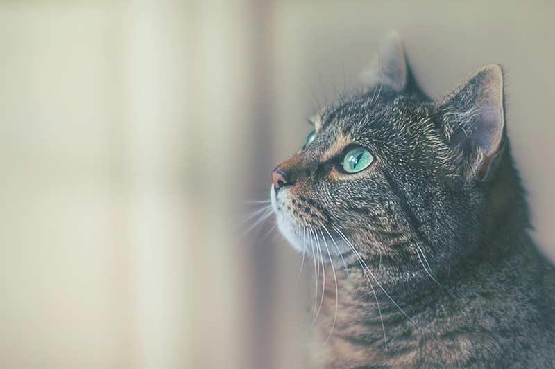assurance chat sans delai de carence