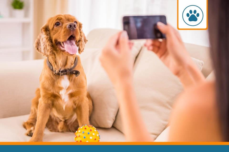 chien à la recherche d'un devis d'assurance pour chiens