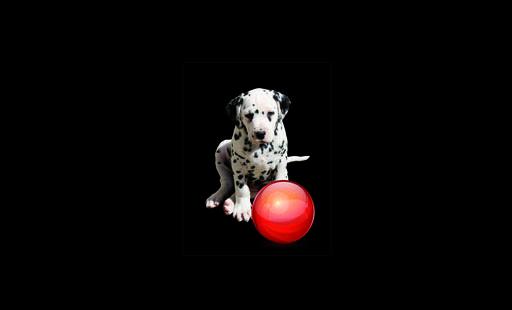 éducateur canin Allier