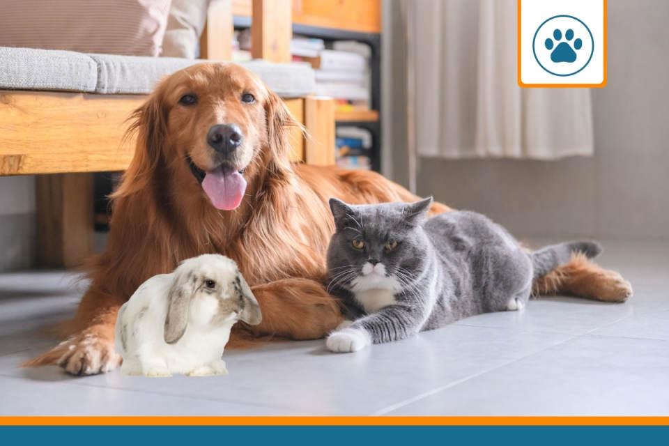 prix assurance animaux pour chien chat et lapin