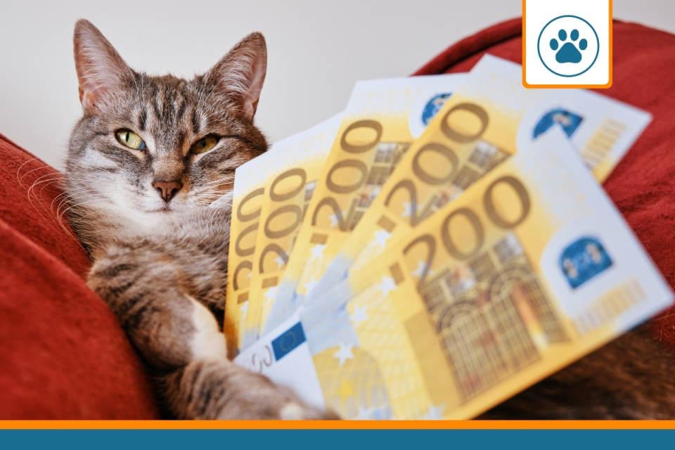 un chat avec des billets à la recherche du meilleur prix pour son assurance