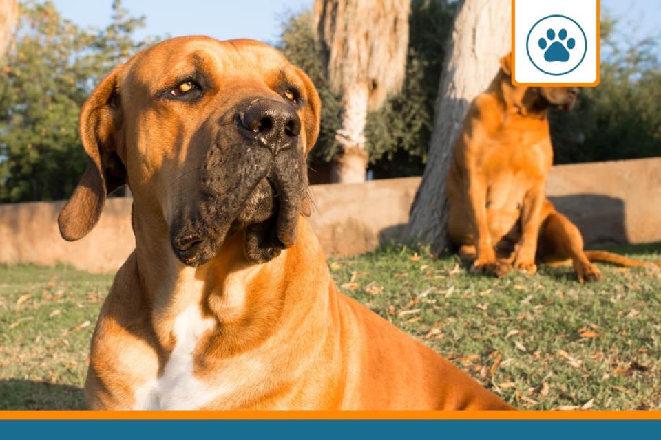 prix d'assurance pour chien de catégorie 1