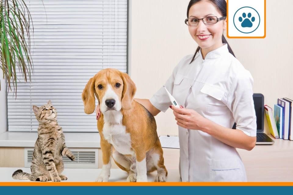 Chien chez le vétérinaire et ne payant pas le prix fort grâce à sa mutuelle