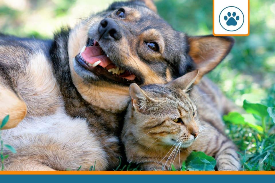 animaux ayant pu résilier leurs assurances