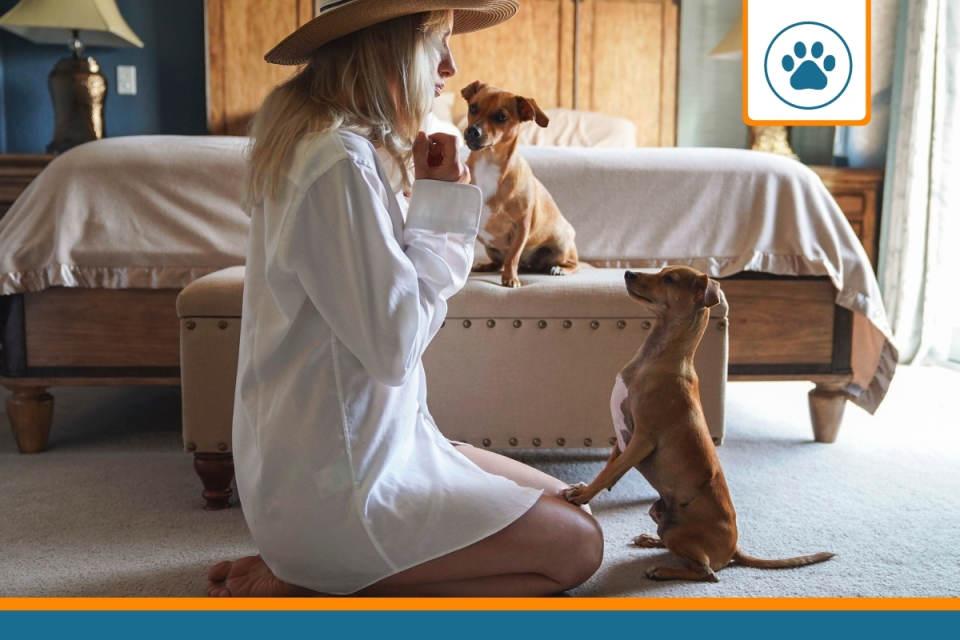 chiens couverts par une responsabilité civile jouant avec leur maitresse
