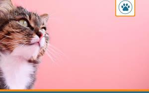 chat souhaitant s'assurer avec une mutuelle pas chère