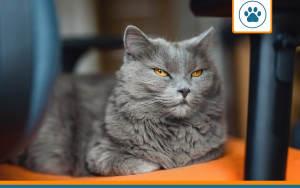 chat de plus de 10 ans eligible aux mutuelles