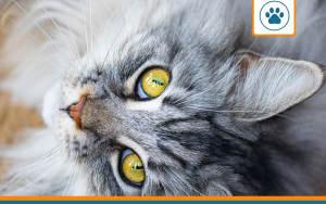 avis sur les mutuelles pour chat