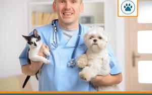 animaux chez le vétérinaire après avoir utilisé un comparateur d'assurance animaux