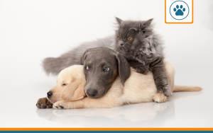 comparatif de mutuelles pour animaux