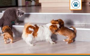 devis assurance animaux pour chiens, chats et nac
