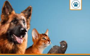 les meilleures assurances pour animaux