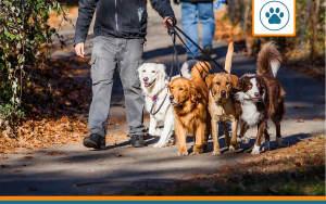 plusieurs chiens en balade protegés par les meilleures assurances