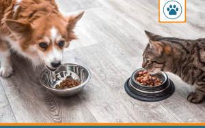 animaux en train de manger à qui il faudra choisir une mutuelle
